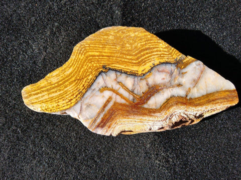 Polished fossil stromatolite. Strelley Pool Formation SPF110