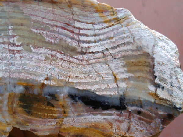 Polished fossil stromatolite. Strelley Pool Formation SPF113