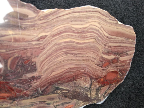 Polished fossil stromatolite. Domal from Irregully formation IRR125