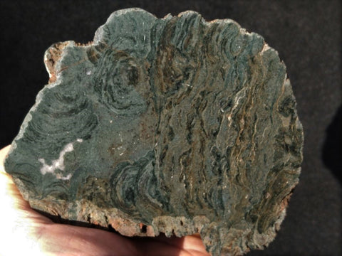 Polished fossil stromatolite. Alcheringa narrina. ALC152