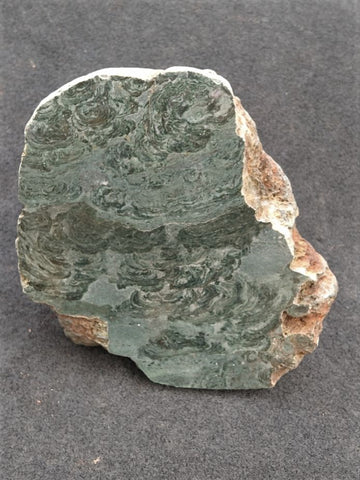 Polished fossil stromatolite. Alcheringa narrina. ALC153