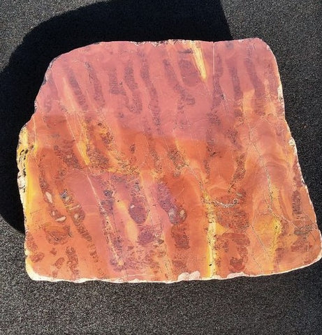 Wyloo group stromatolite
