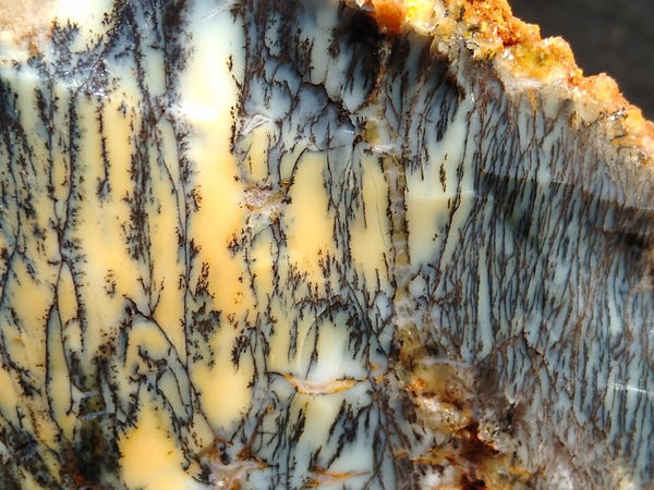 Dendritic Opal  rough.  DOR 175