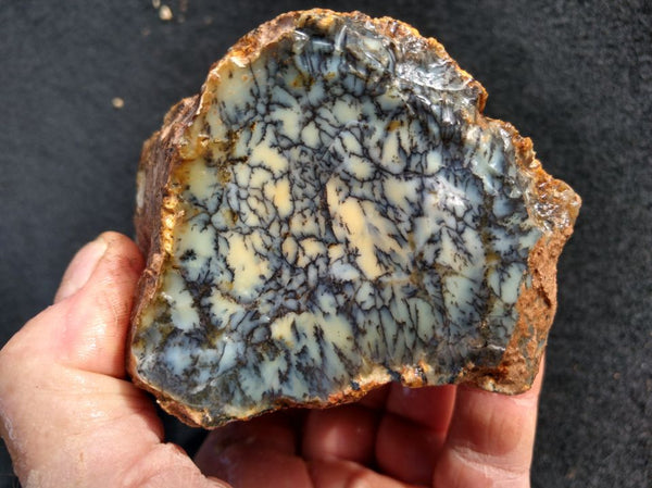 Dendritic Opal  rough.  DOR 182