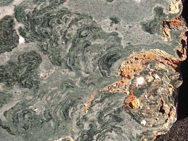 Polished fossil stromatolite. Alcheringa narrina. ALC157