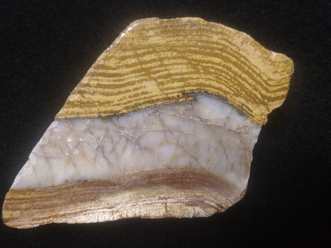 Polished fossil stromatolite. Strelley Pool Formation SPF119