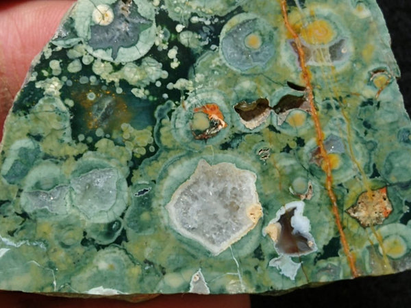 Polished Rainforest Jasper RFJ115
