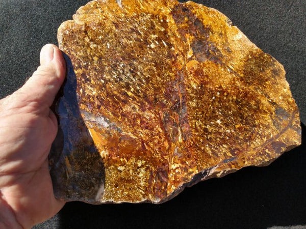 Polished Golden Amphibolite GA117