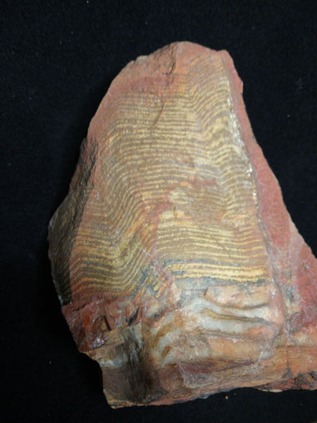 Polished fossil stromatolite. Strelley Pool Formation SPF128