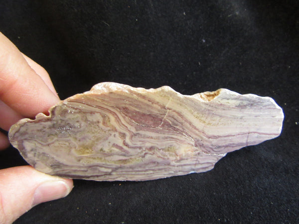 Polished fossil stromatolite. Domal from Irregully formation IRR110