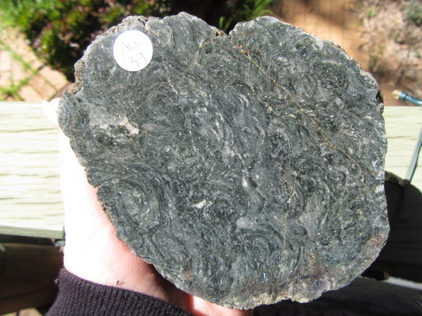 Polished fossil stromatolite. Alcheringa narrina.  ALC139