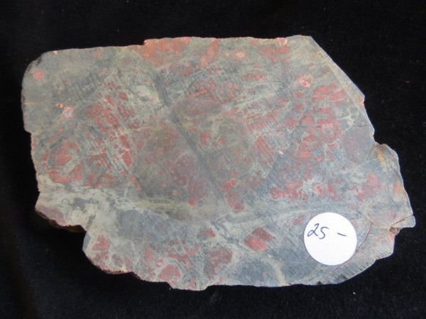 Polished Spherulitic Rhyolite SR114