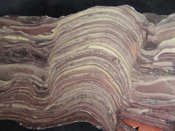 Polished fossil stromatolite. Domal from Irregully formation IRR101