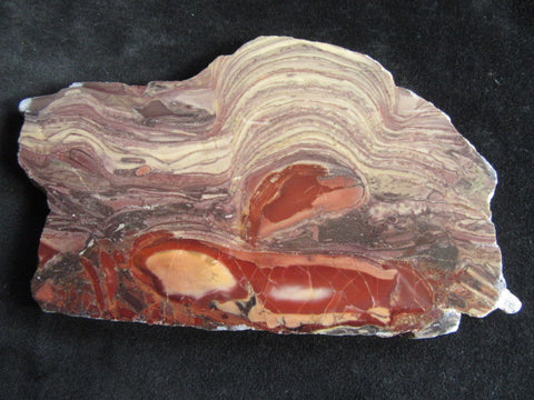 Polished fossil stromatolite. Domal from Irregully formation IRR102