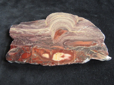 Polished fossil stromatolite. Domal from Irregully formation IRR105