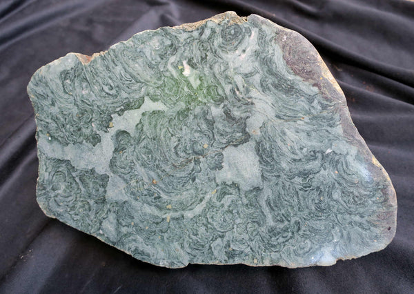 Polished fossil stromatolite. Alcheringa narrina. ALC127