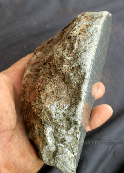 Polished fossil stromatolite. Alcheringa narrina. ALC128