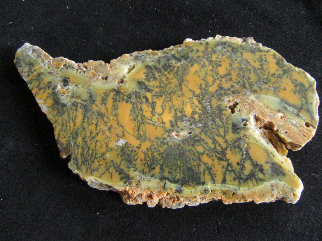 Polished Dendritic Opal DO147