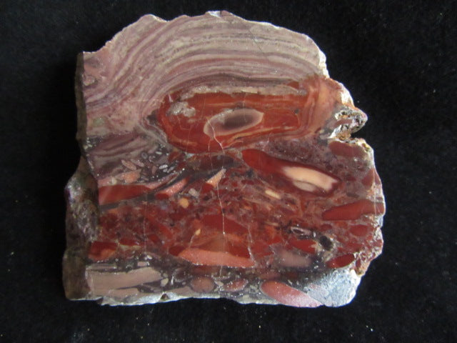 Polished fossil stromatolite. Domal from Irregully formation IRR108