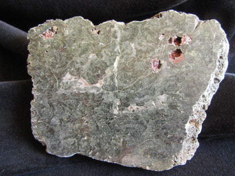 Polished fossil stromatolite. Alcheringa narrina. ALC143