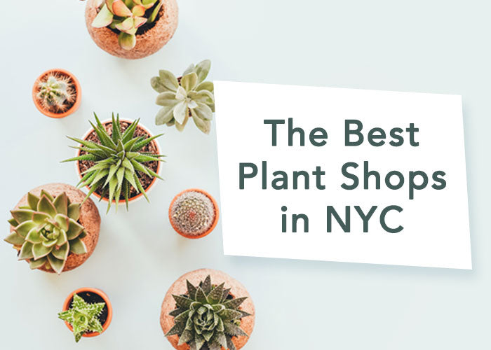 Our Favorite Spots to Find Plants in NYC