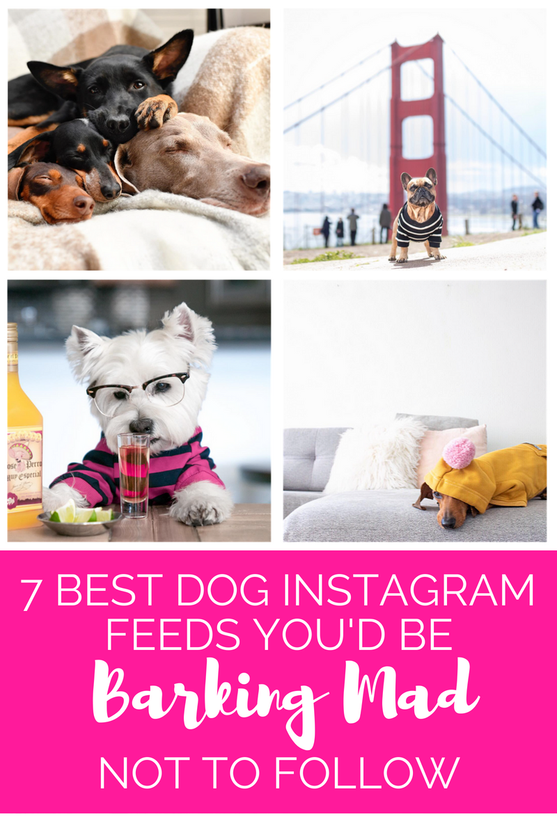 Seven Best Dog Instagram Feeds You'd Be Barking Mad Not to Follow