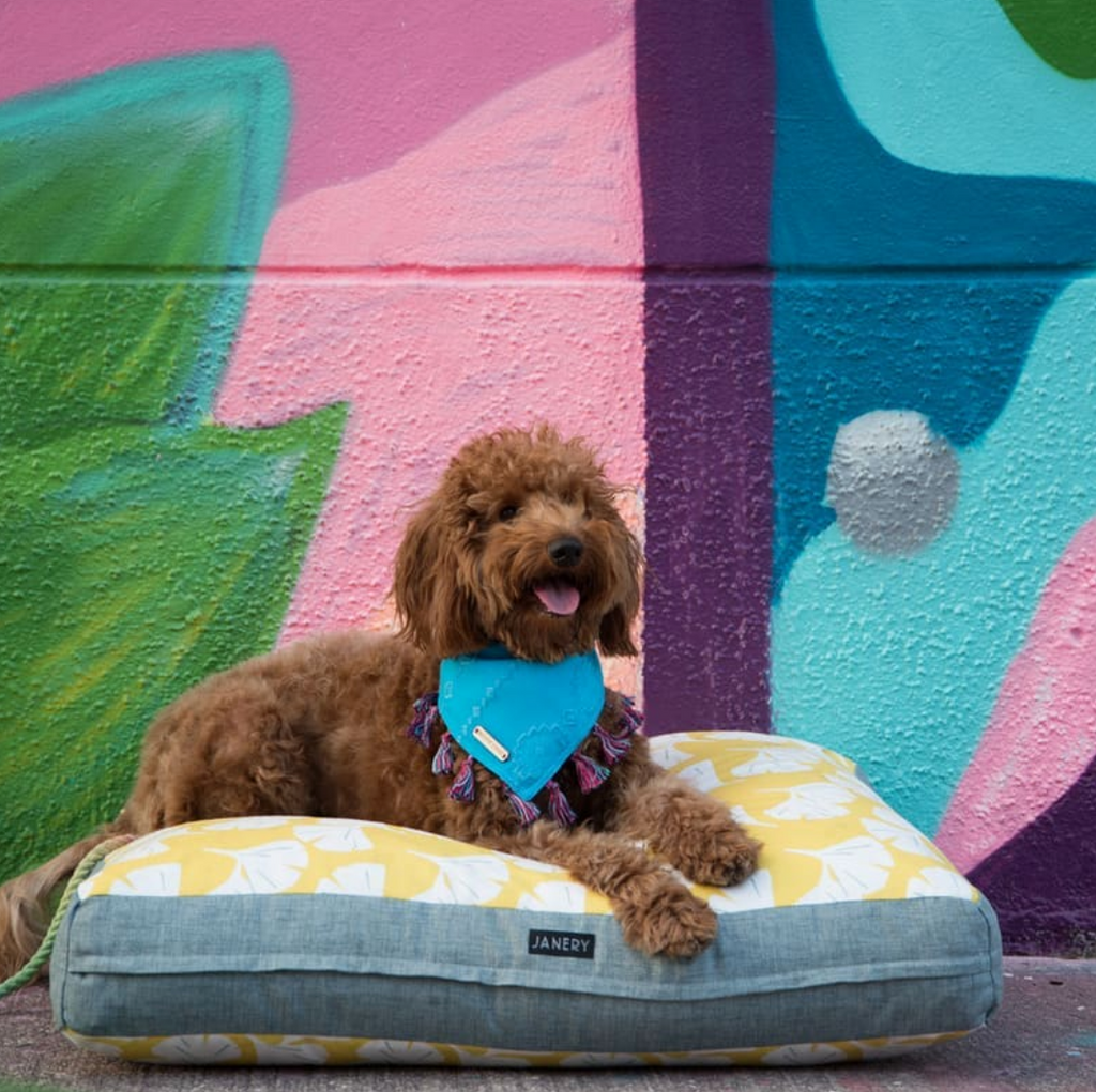 Janery Charlie Cushion in Yellow Gingko featuring @kiara.minigoldendoodle