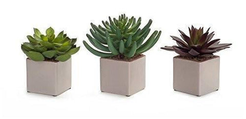 Potted Assorted Succulents