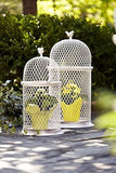 Chicken Wire Bird Cage