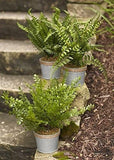 Grey/Metal Potted Fern