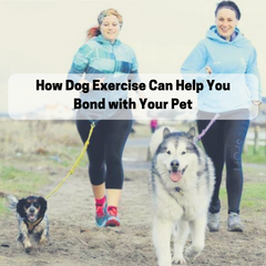 How Dog Exercise Can Help You Bond with Your Pet