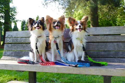 Shop for running dog leash online