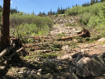 Grizzly Lake Trail Work