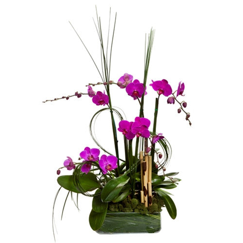 Orchid Garden plant