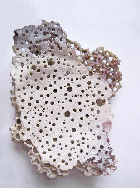 Cliona Celata bore holes on clam shells