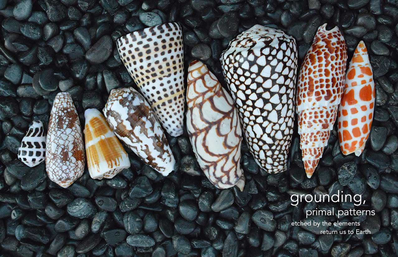 Affina Shell Print Collection