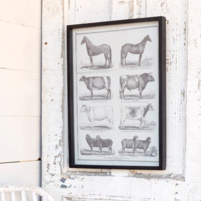 Farm Animal Framed Print