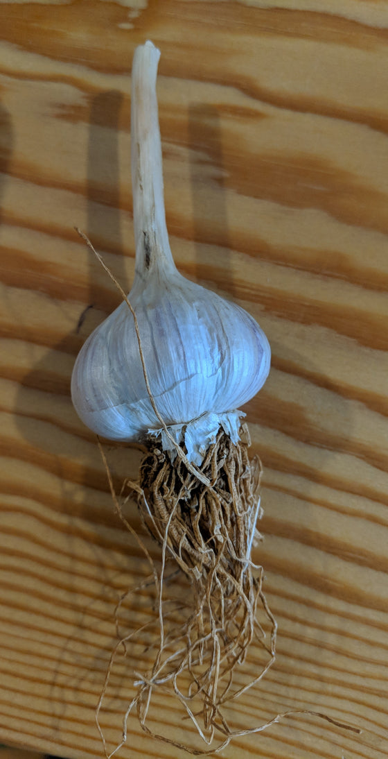 Produce - Local Garlic Bulb - Frank's Produce