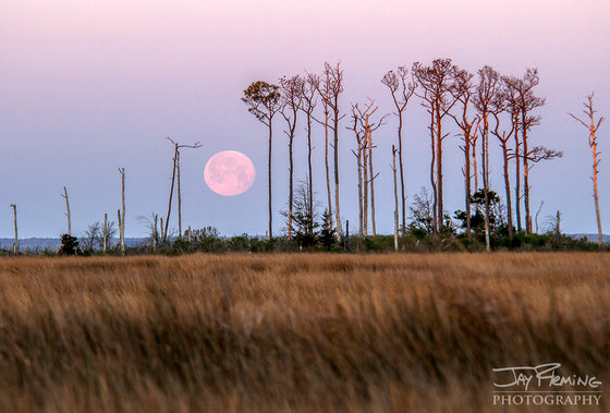 Print - Jay Fleming - Chesapeake Bay Moonset