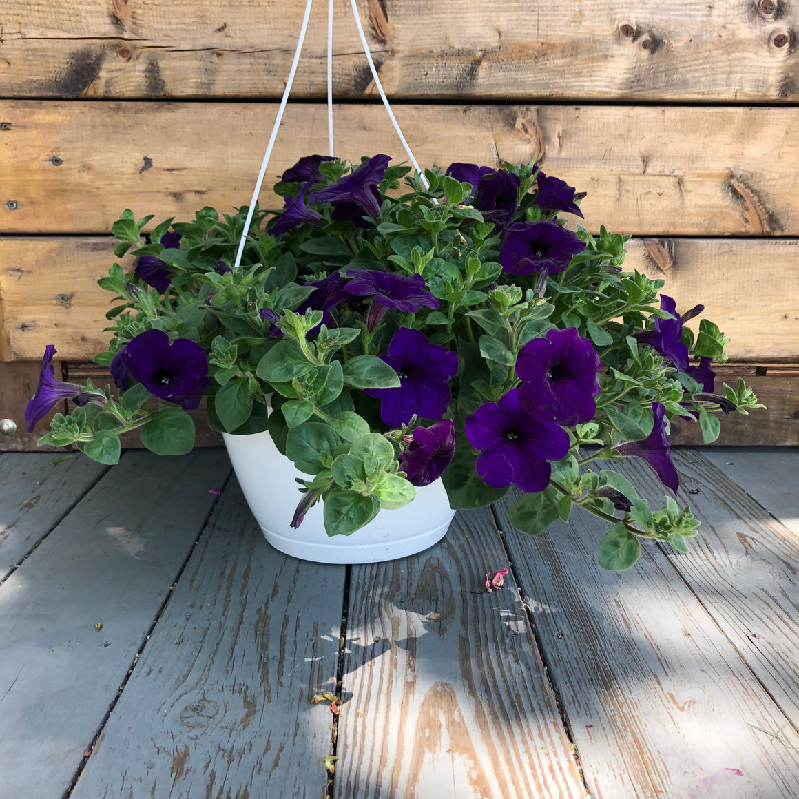 Flowers - Hanging Baskets - 10 inch