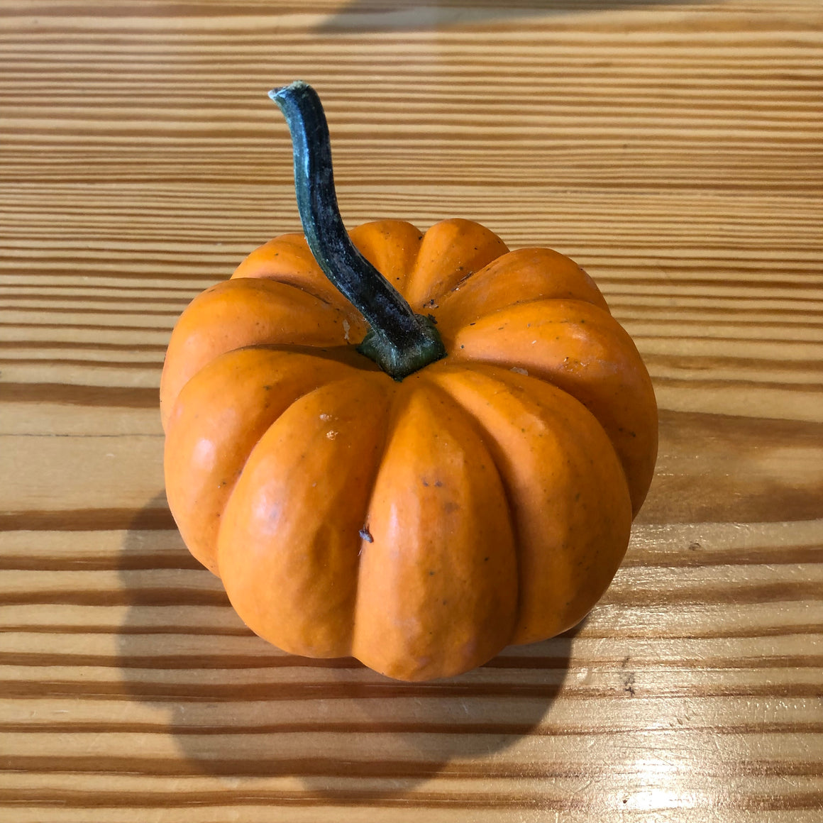 Produce - Mini-pumpkins - Frank's Produce
