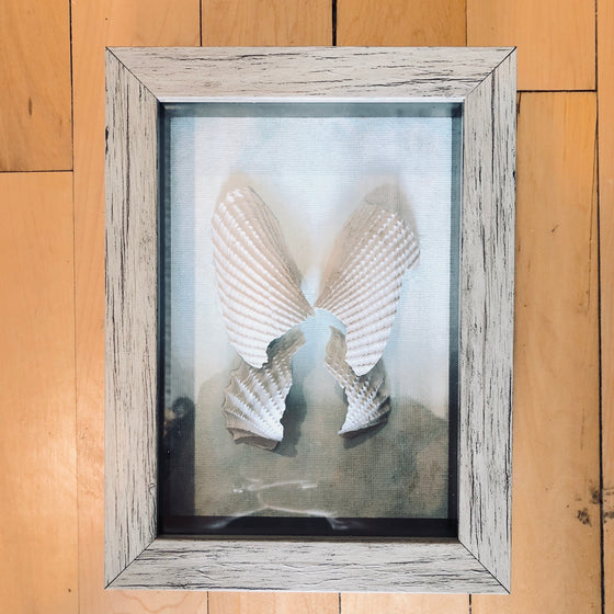 Shadow Box - Angel Wing Shells