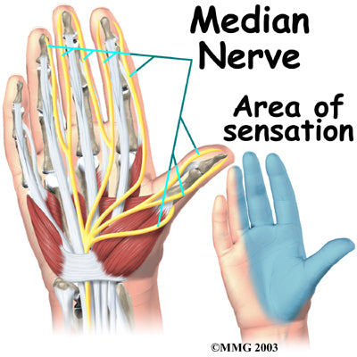 Median Nerve Diagram Sore Hands NewGrip Wrist Support Wraps