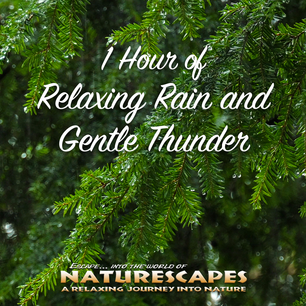 1 Hour of Relaxing Rain and Gentle Thunder - John Grout