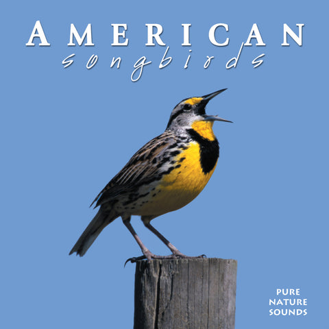 American Songbirds - NATURESCAPES