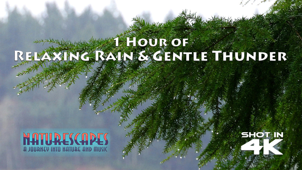 I hour of Relaxing Rain and Gentle Thunder 4K - John of Light, Naturescapes