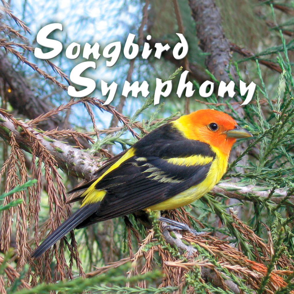 Songbird Symphony - NATURESCAPES
