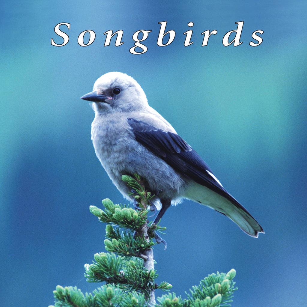 Songbirds - NATURESCAPES