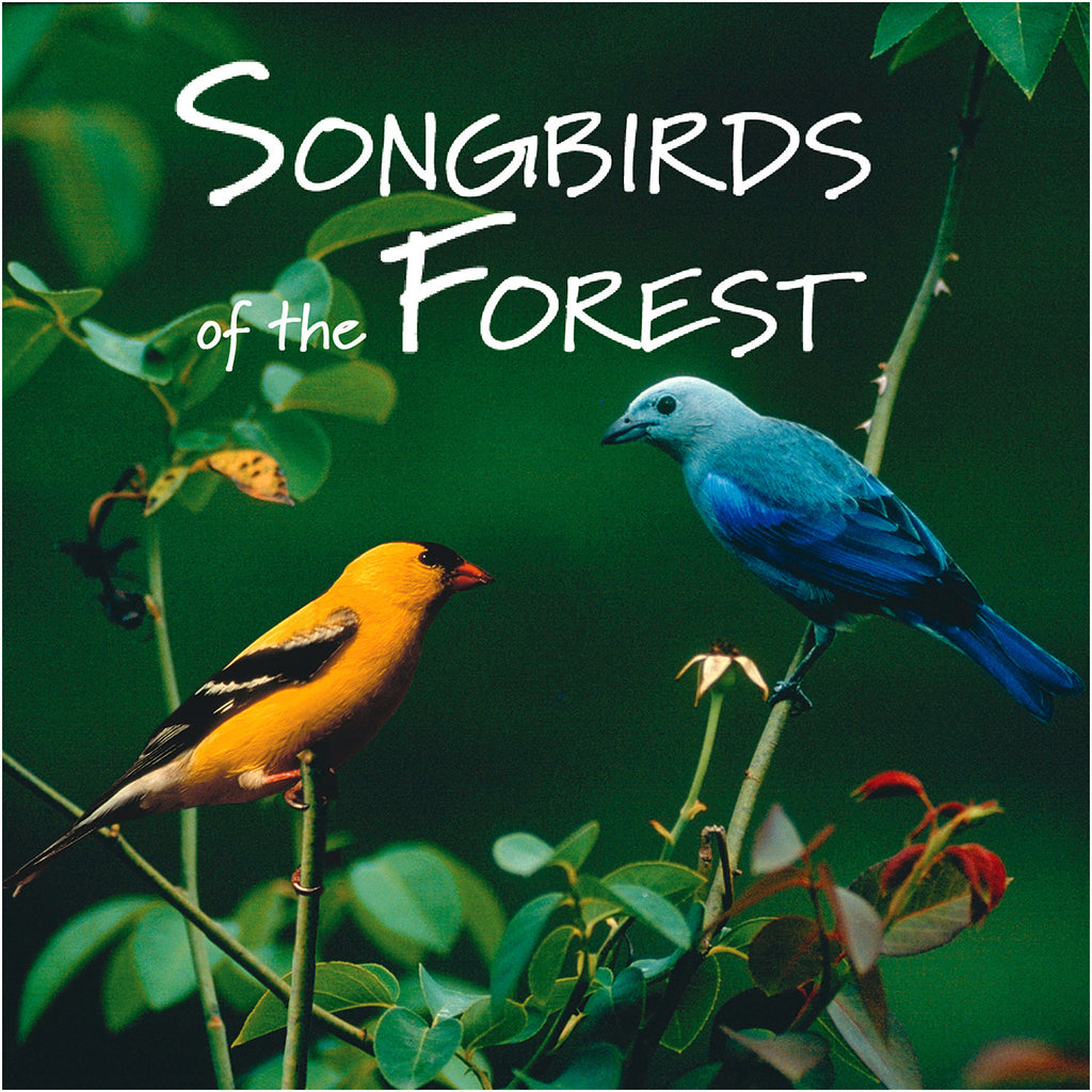 Songbirds of the Forest - NATURESCAPES