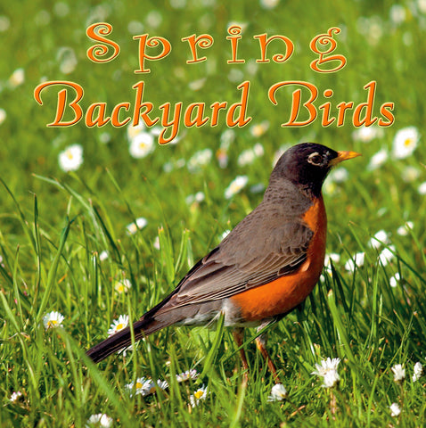 Spring Backyard Birds
